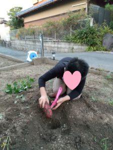 くさかのお家でいも掘り体験